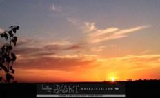 leafy sunset-4