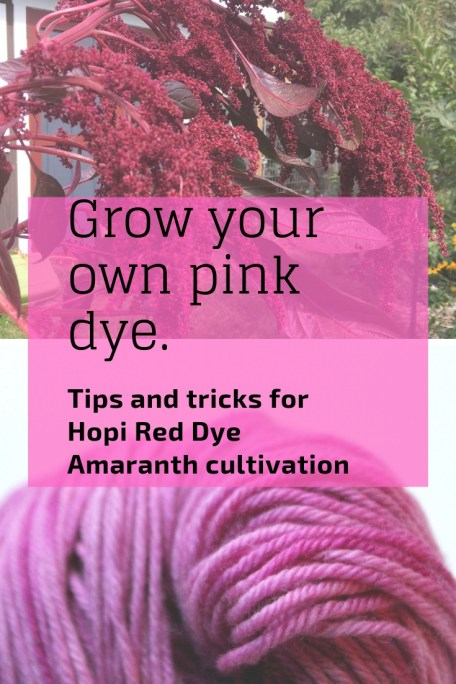 A gorgeous annual 4 to 6 feet tall with long, draping flower heads, this amaranth is a stunner in the garden and has so many uses!