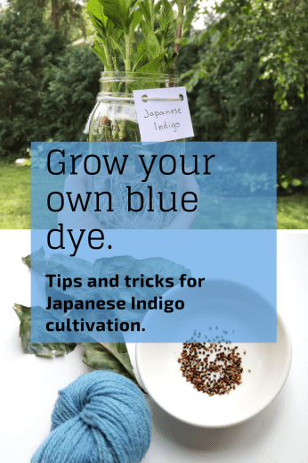 Want to grow your own dye garden? Try this easy to grow plant, used for centuries to create a beautiful blue natural dye. Japanese Indigo tips and tricks for cultivation as well as seed sources.