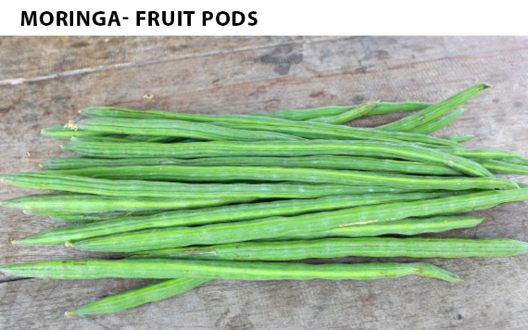 Moringa Fruit Pods