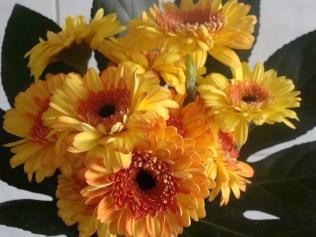 Mooie bloemen -Nice flowers