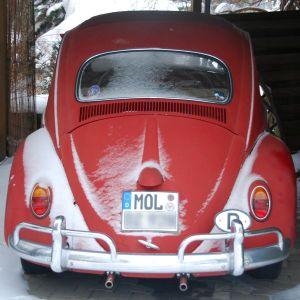 Käfer im Schnee