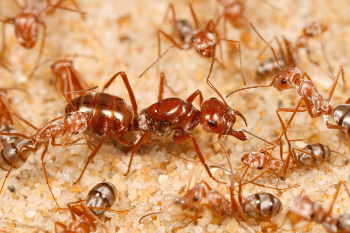 How To Get Rid Of Ants For Good