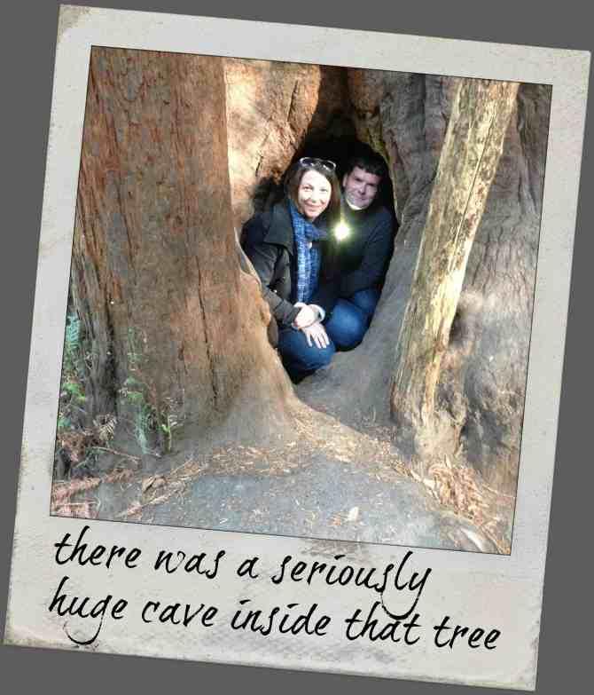 knowgluten in Northern California - inside a redwood tree