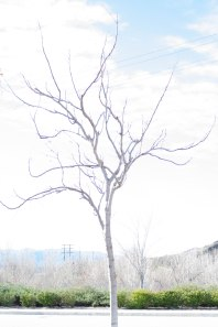 Naked overexposed tree