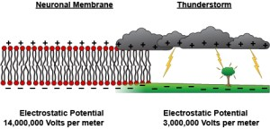 Membrane by Knowing Neurons