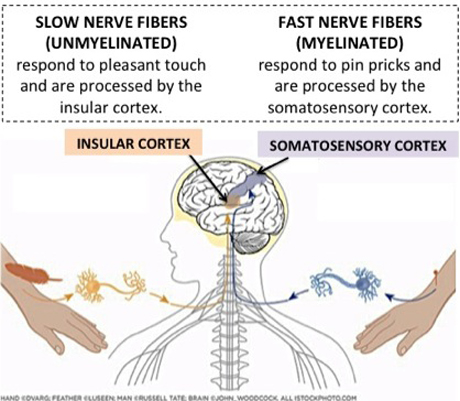 Fast vs Slow-conducting fibers by Knowing Neurons