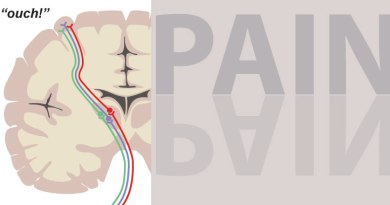A World Without Pain Knowing Neurons Jillian Shaw Ouch