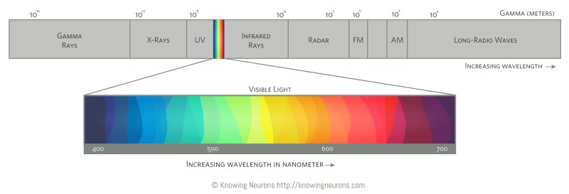 Electromagnetic Spectrum Knowing Neurons