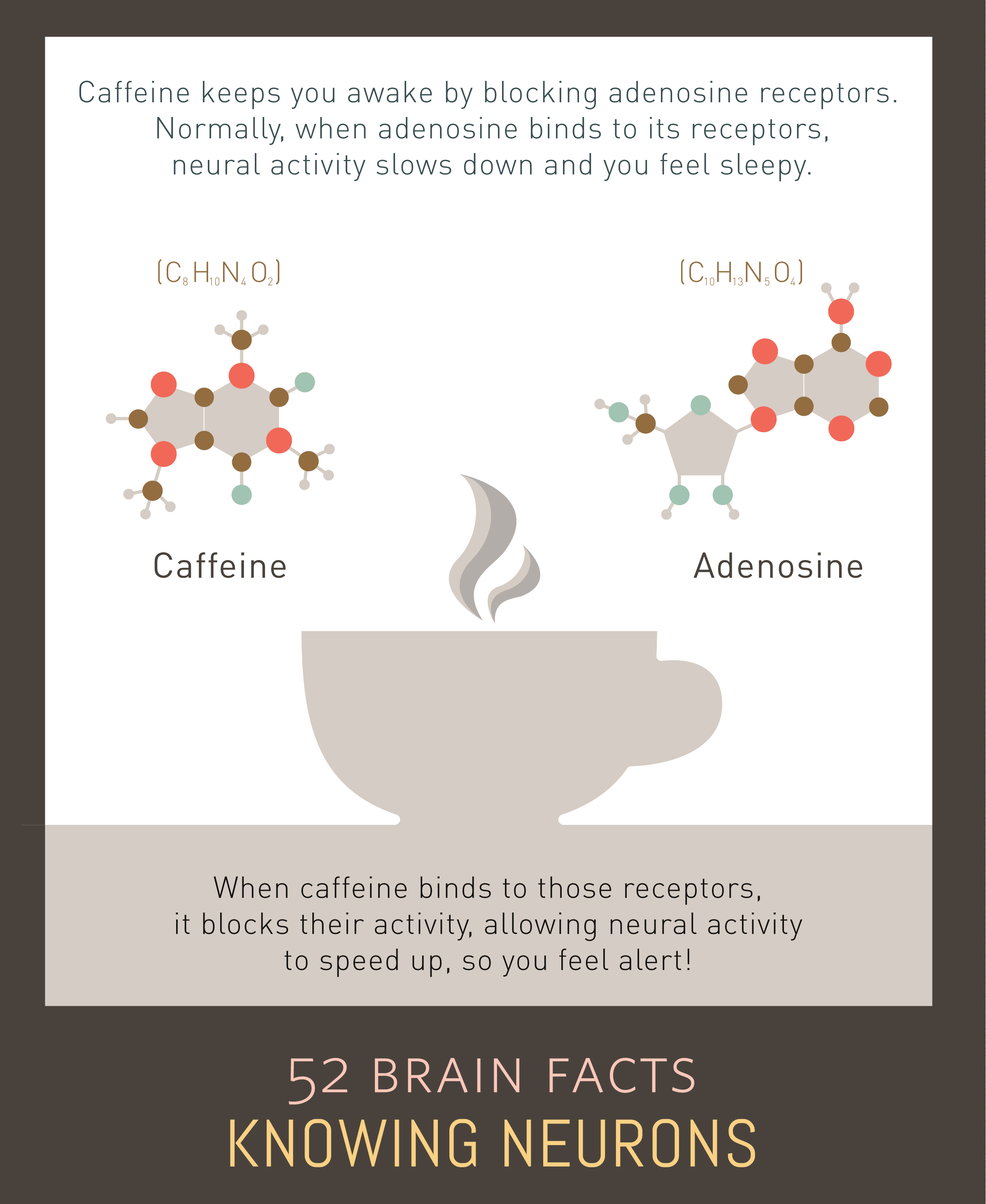 Myth or Fact? The mechanism by which caffeine keeps humans awake is a mystery