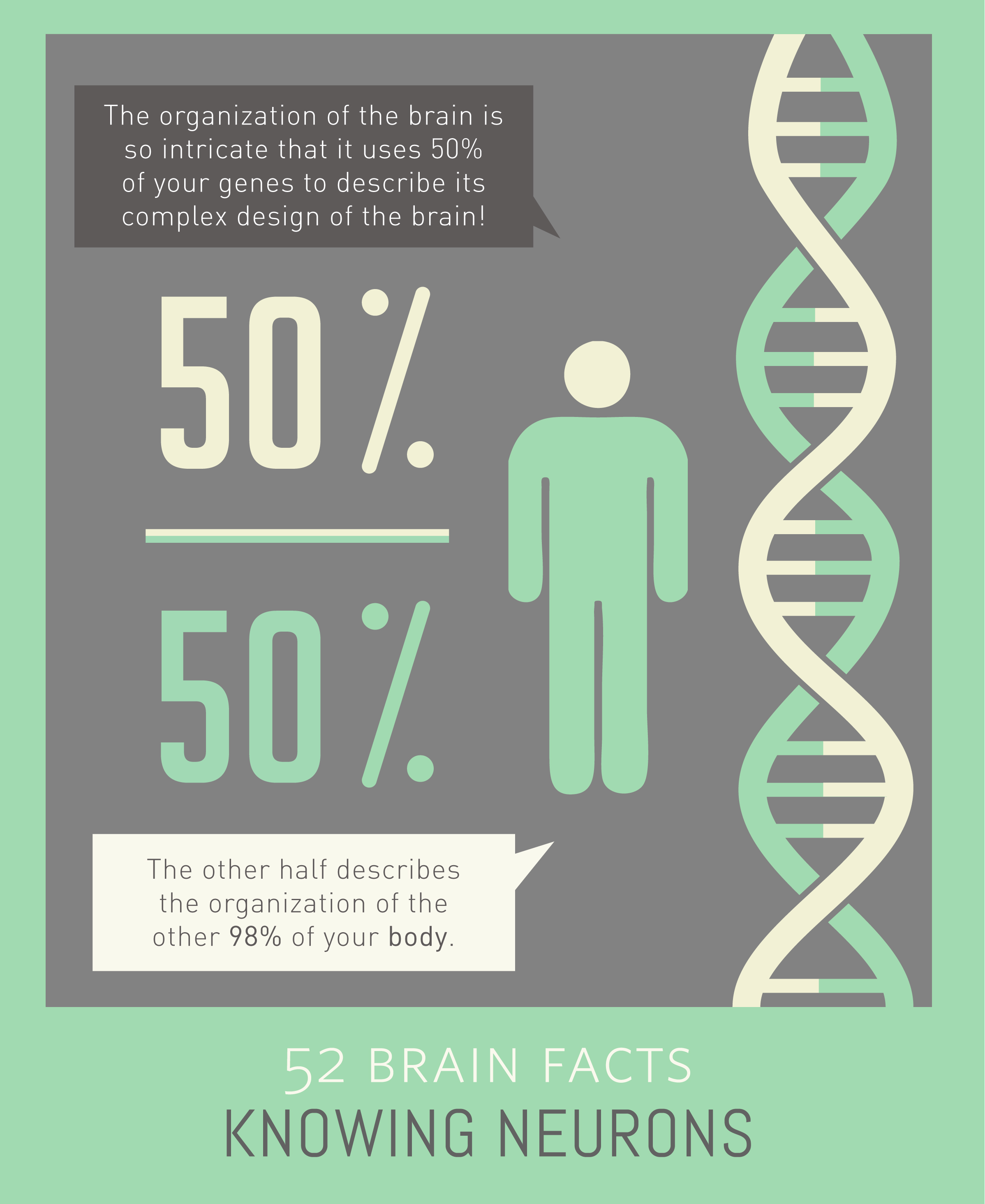 Myth or Fact? 10% of your genes describe the organization of the brain.