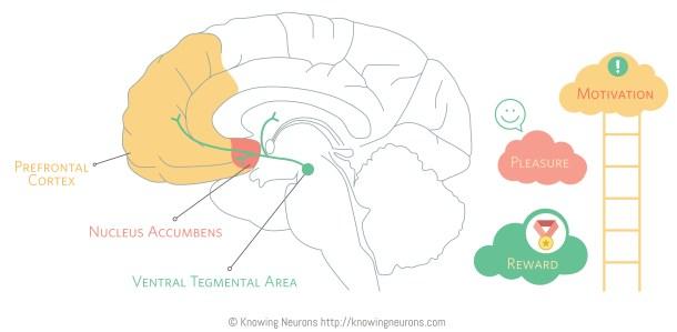 Reward_Knowing-Neurons