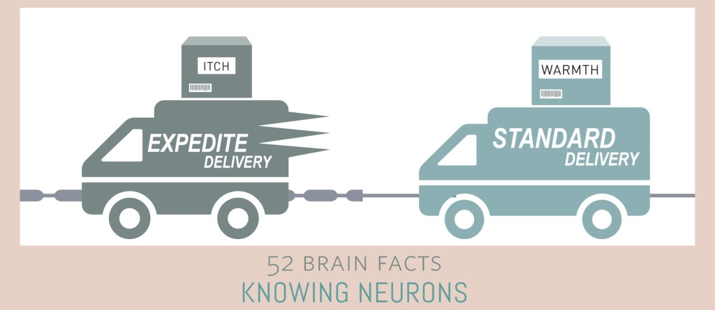 Myth or Fact? Information travels at one speed in your brain. Cover Image