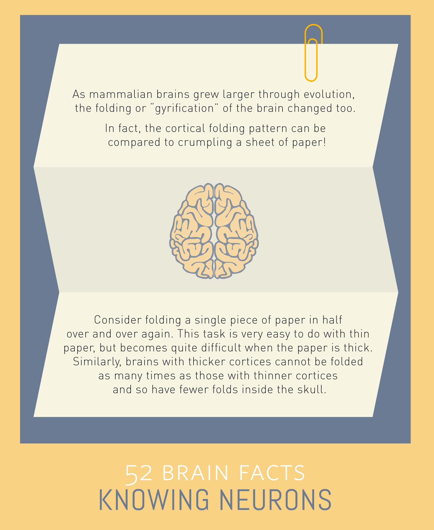 Myth or Fact? Cortical folding is a lot like crumpling paper.