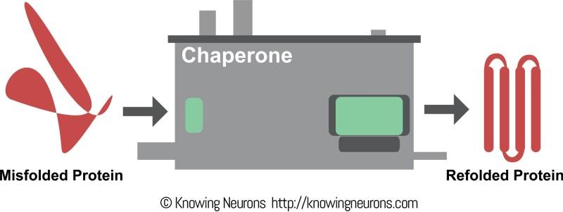 KN Parkinsons Folding ProtienEdit2