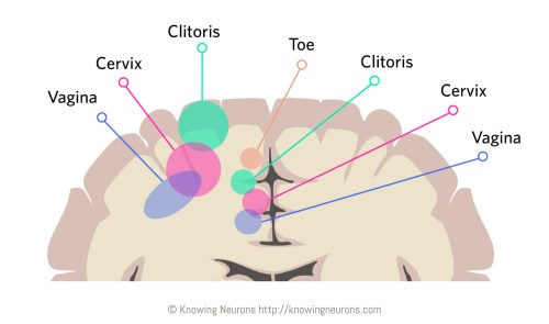 Touch_2_Knowing-Neurons