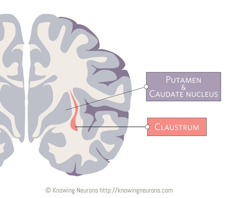 Clastrum_Knowing-Neurons_2