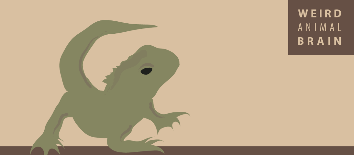 Weird Animal Brain: Tuatara Lizard