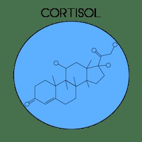 Cortisol Hormone (Illustrated by McCall Sarrett)