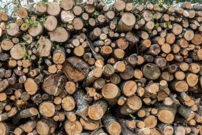 Chestnut wood pile