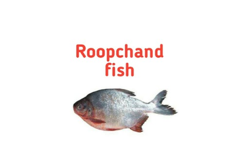 Roop Chand fish