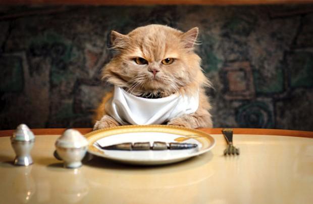 Fussy_cat12-620x403