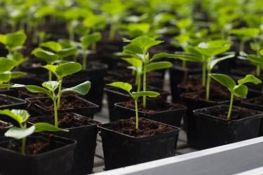 花を育てるには?苗の植え方やポットの使い方