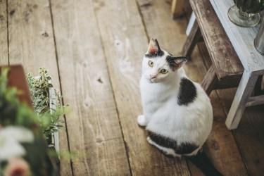 猫用の消臭スプレーを手作りしてみませんか。安全で簡単な方法