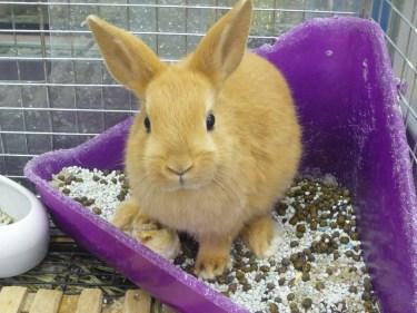 ウサギのオス同士で仲良くなる方法とは?うさぎの飼い方