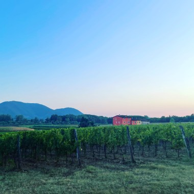 Unknown Tuscan Wineries