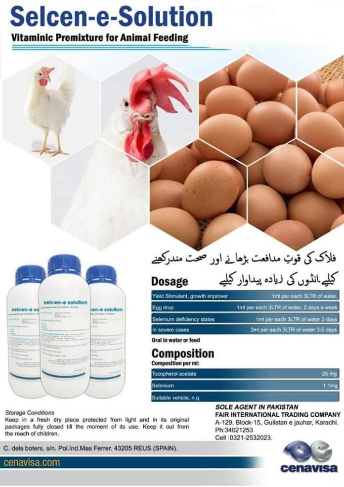 The Best Diet Eggs