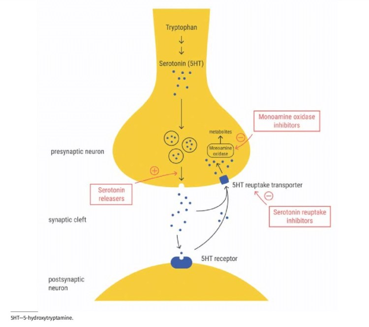 Image, diagram of the serotonin system with effects of MAOIs and SSRIs shown