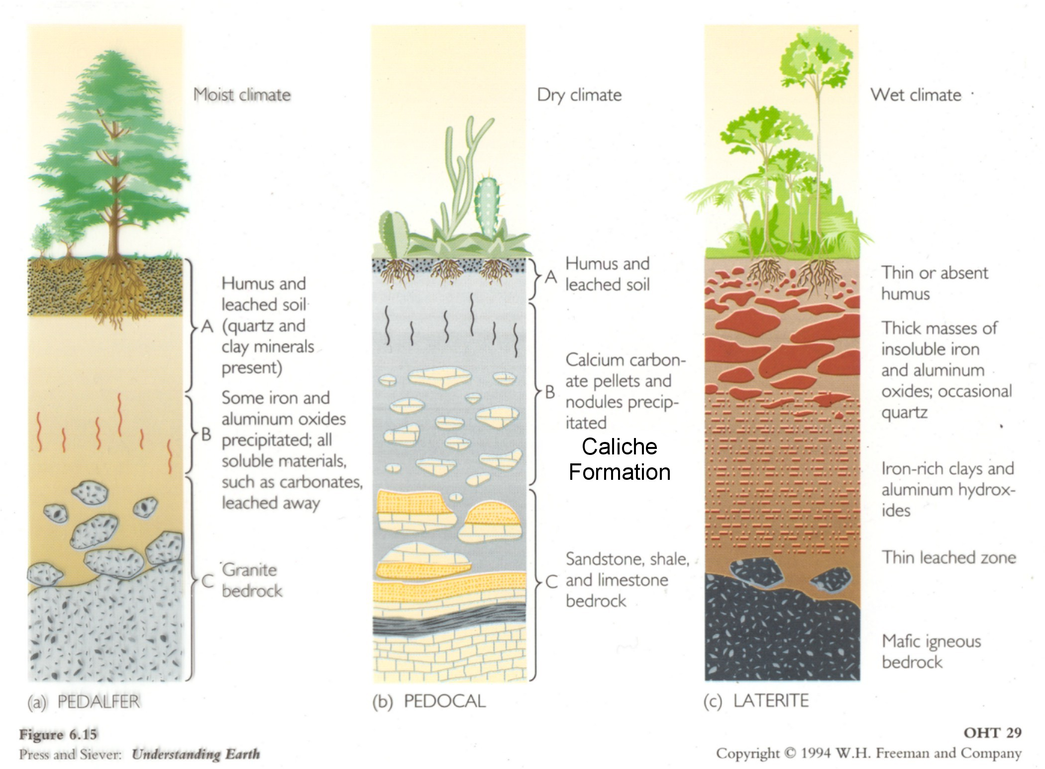 Skin Of The Earth Soil