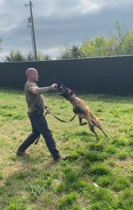 k9 jumping for item in handler's hand