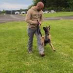 k9 walking and looking at handler