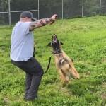 k9 jumping for item in handler's hand
