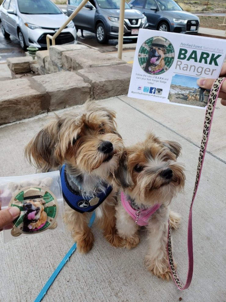 Wong's dogs, Chip and Ruby, morkie, small dogs, bark ranger