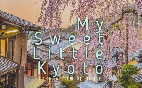 A Cherry Blossom Viewing Guide in Kyoto