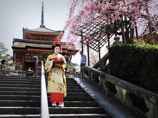 Geisha and Cherry Blossom, Kyoto, Japan