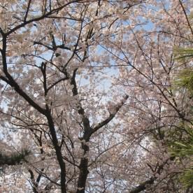 08 Geyongju 2 Anapji Pond