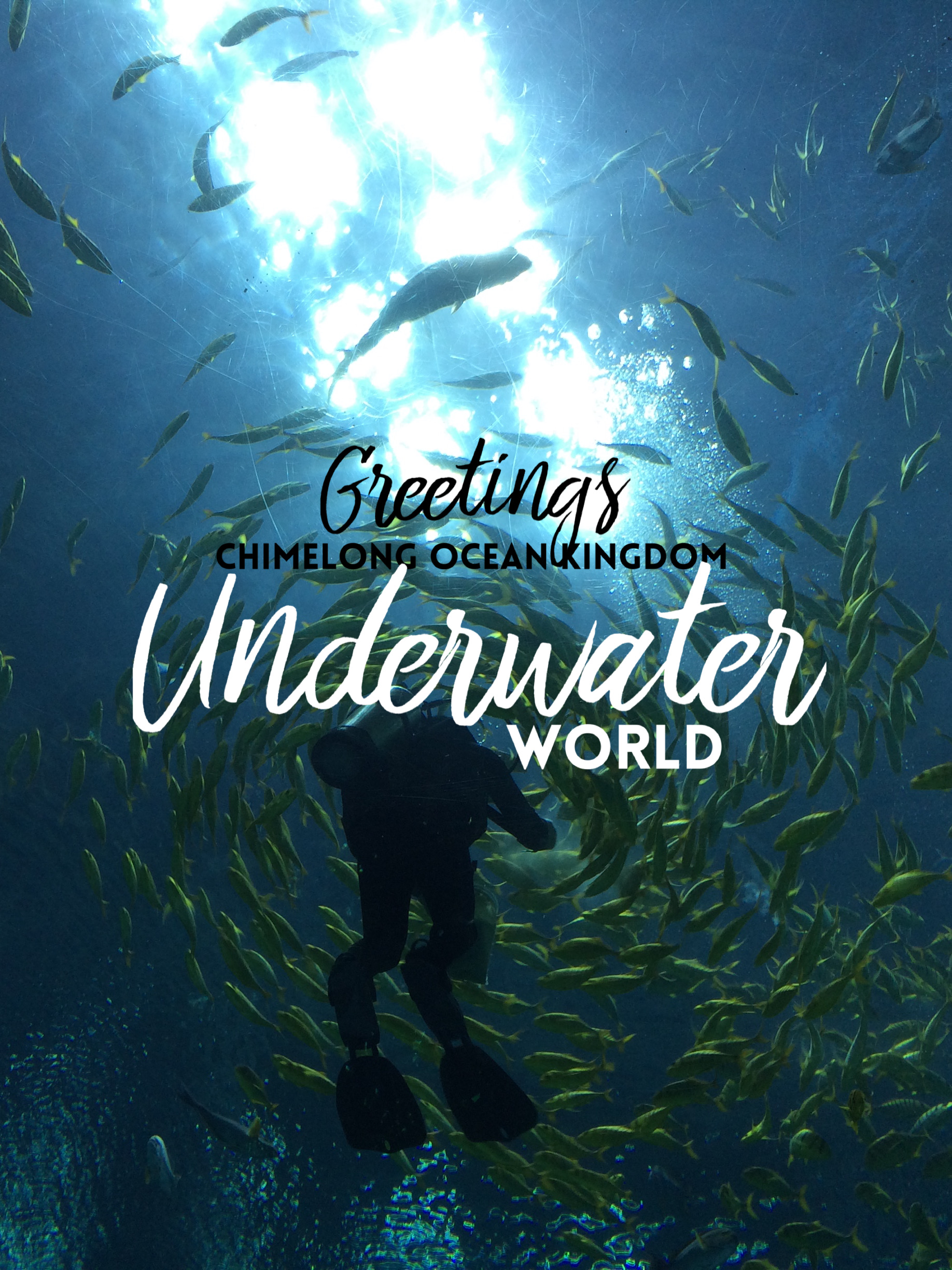 Greetings from the Underwater World