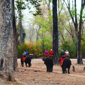 Elephant ride in Angkor