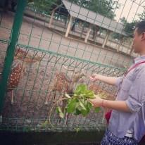 Yogyakarta Java Prambanan - deer 2