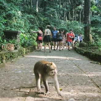 monkey-forest-1