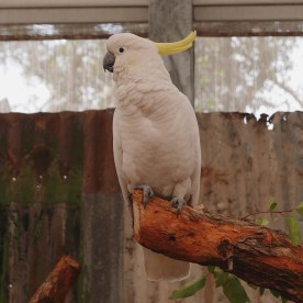 Perth - Caversham Wildlife Park 11