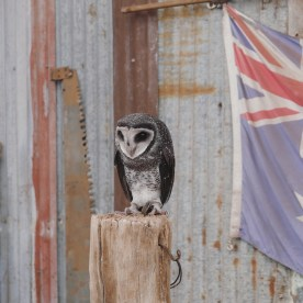 Perth - Caversham Wildlife Park 7