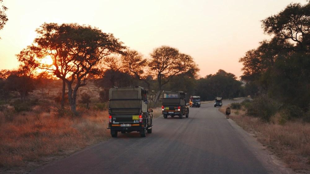 South Africa, Kruger - Safari Lion