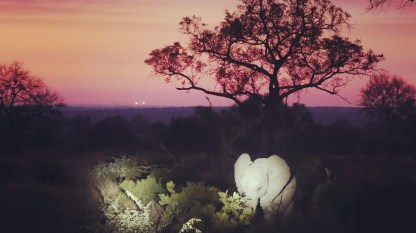 South Africa, Kruger - Safari Night Elephant