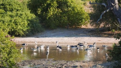 Birds in Chobe - When I was planning my trip to South Africa, and I was scrolling through the travel forums, one question popped out rather frequently: Chobe or Kruger?