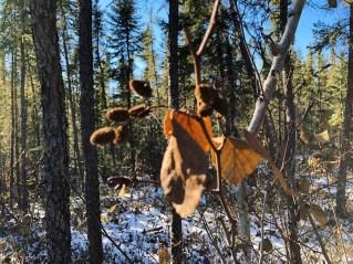 Yellowknife Ingraham Trail